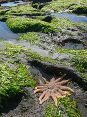 Star Fish over green coral beach, marine life