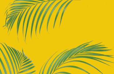 Tropical palm leaves on yellow background. Minimal nature. Summer Styled.  Flat lay.  Image is approximately 5500 x 3600 pixels in size