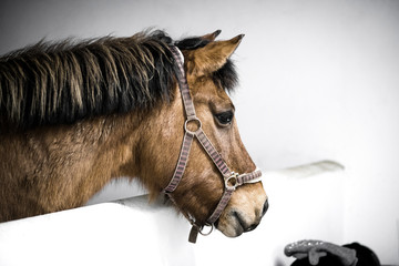 Brown horse in a stable with a bridle