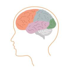 Мозг02
