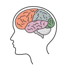 Мозг01