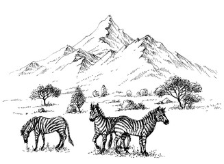 Zebras in wilderness sketch background