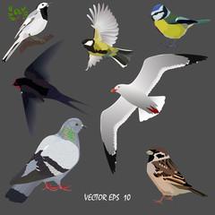 Set of popular urban birds