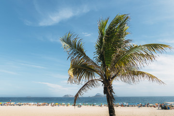 Single palm tree with out of focus Ipanema beach, Brazil