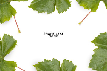 Grape leaf isolated on a white background with copy space.