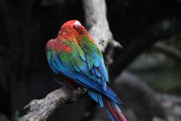 macaw parrot bird in thailand