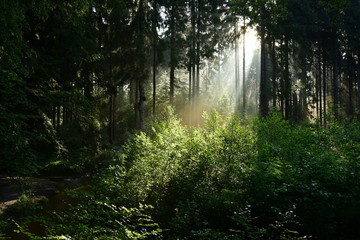 Papiers peints Forets Sunrise in the forest with sunbeams shining through the trees