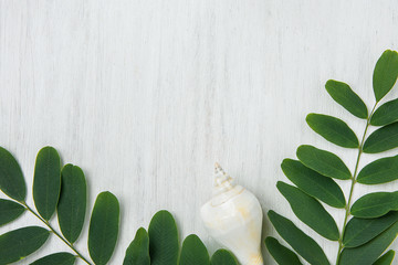 Beautiful Spiral Sea Shell Locust Tree Branches with Green Leaves on White Wood. Summer Spring Vacation Wellness Body Skin Care Organic Cosmetics Concept. Product Branding Copy Space