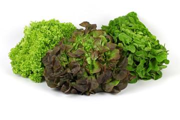 Drei verschiedene Salatköpfe