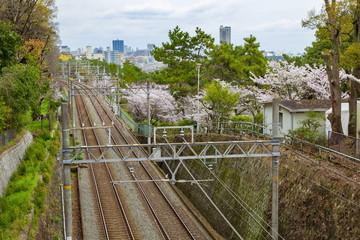 桜満開の須磨浦公園、神戸市須磨区にて