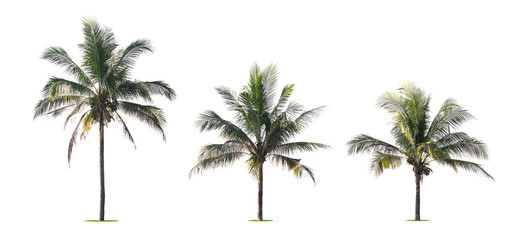 three palm tree isolate on white background