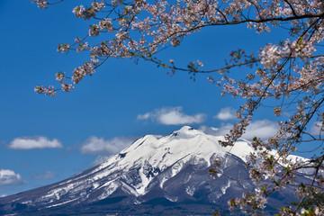 残雪の岩木山と桜