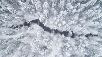 Aerial view of the forest and river at winter. The trees are covered with snow