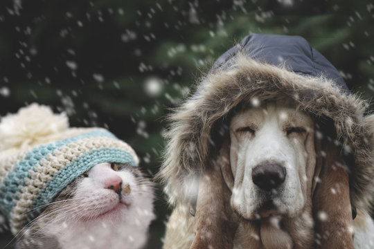 Cat and dog in snow