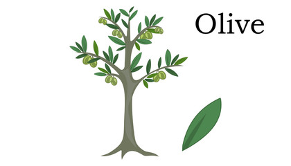 Olive Trees vector element. vector icon green