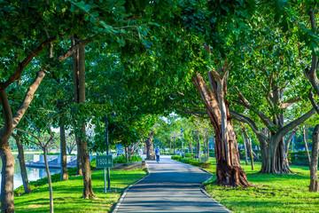 Road pathway Jogging track in the  public park under big tree