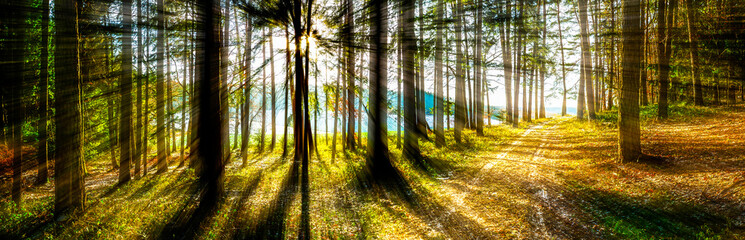 Forest Panorama in Bavaria Germany Wall mural