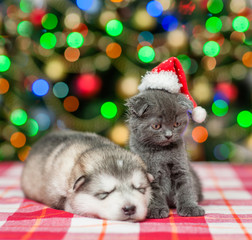 Sleeping puppy  and kitten in red christmas hat on a background of the Christmas tree