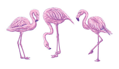 3 flamingos drawing