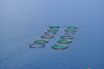 The Fish Farms.