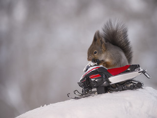 Red squirrel with an snowmobile