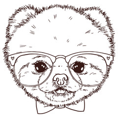 Wall Murals Hand drawn Sketch of animals Black and white isolated pomeranian dog head with bow-tie and glasses. Vector hand drawn puppy face.