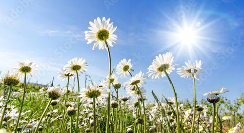 Frühlingserwachen Meditation Glück Freude Entspannung Relaxen