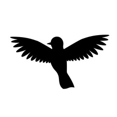 The bird is black and white. Silhouette of magpies, crows, crow or raven, Isolated, white background
