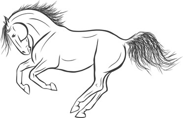 A sketch of a freely cantering horse.