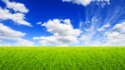 Fototapete - green field grass with a blue sky and clouds