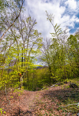 footpath through green forest in springtime. lovely nature scenery
