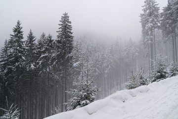 Nature covered in snow during deep winter. Slovakia