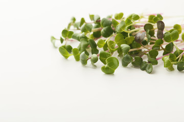 Micro greens sprouts isolated at white