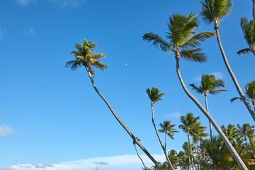 Beach Punta Cana, holiday resort. Dominican Republic.