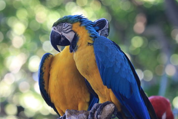 two beautiful parrots with loving gesture