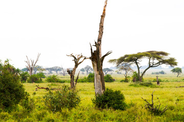 Serengeti National Park, Tanzanian national park in the Serengeti ecosystem in the Mara and Simiyu regions
