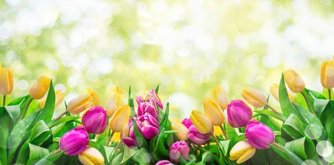 Frühlingshintergrund Tulpen Wiese Licht Bokeh