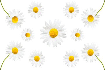 Collection of creative daisies flowers isolated on white background. Flat lay, top view