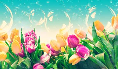 Tulpenkarte mit Seifenblasen und blüten