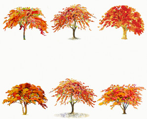 Painting  illustration  red, orange colors of Peacock  flowers trees.