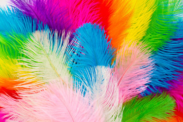 Acrylic Prints Carnaval Bright colored feathers for a carnival costume. Color confetti. White background.