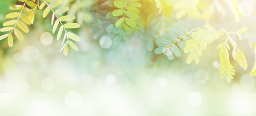 Wall Mural - banner tropical green leaves for spring background.
