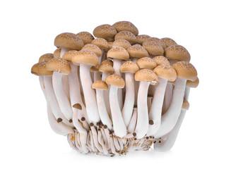 resh brown shimeji mushroom, beech mushrooms or edible mushroom isolated on white background