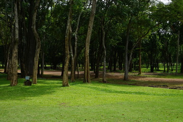 Beautiful nature A lawn with trees.