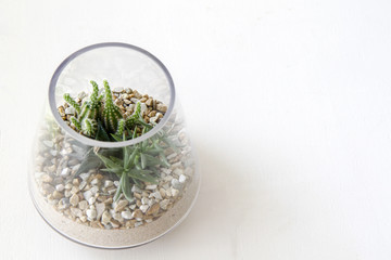 Terrarium on white background with space for text