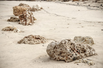 Stones of shell rock in the sand landscape