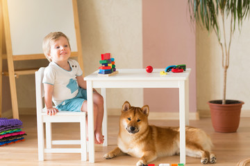 Little two-years old child boy smiling while play with wooden cubes with his dog shiba inu puppy, lying on the floor near legs. Friendship of the child and the dog concept