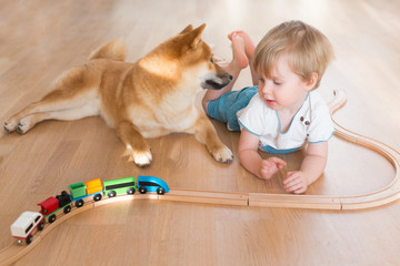 Shiba inu dog and 2 year old child boy are best friends, they play together at floor at home, high angle view. Happy kid concept