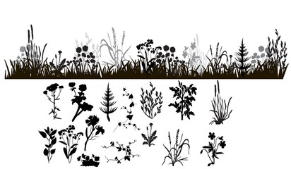 isolated silhouette of grass and plants, isolated on white background