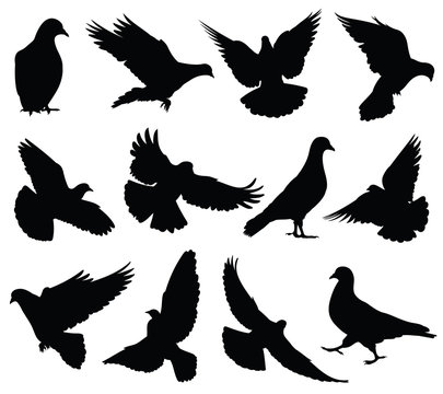 Flying dove vector silhouettes isolated. Pigeons set love and peace symbols